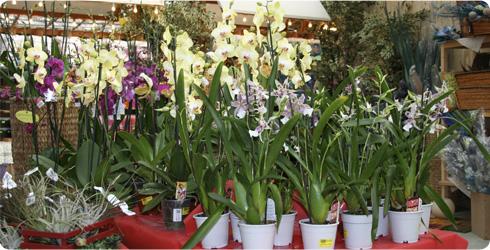 Garden idea - Orchidee da esterno ...